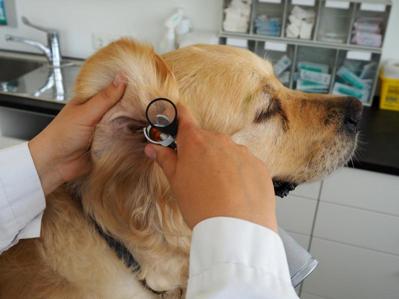Tierarzt Dr. Prader in Allerheiligen bei Perg